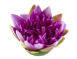 Velda Drijvende Vijverplant Lotus Paars 17 cm