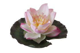 Velda Drijvende Vijverplant Lotus Roze 15 cm