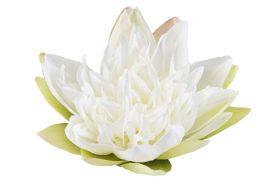 Velda Drijvende Vijverplant Lotus Wit 17 cm