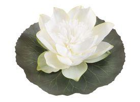 Velda Drijvende Vijverplant Lotus Wit 15 cm