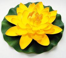 Velda Drijvende Vijverplant Lotus Geel 28 cm