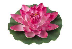 Velda Drijvende Vijverplant Lotus Roze 28 cm