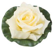Velda Drijvende Vijverplant Roos Op Blad Geel 17cm
