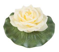 Velda Drijvende Vijverplant Roos Op Blad Geel 13cm