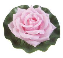 Velda Drijvende Vijverplant Roos Op Blad Roze 13cm