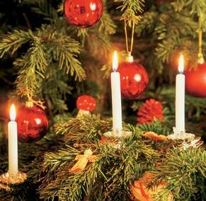 Bolsius Weihnachtsbaumkerzen