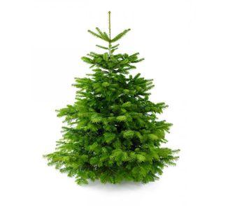 Echte Kerstboom Kopen Online Grote Nordmann 2 5 4 Meter