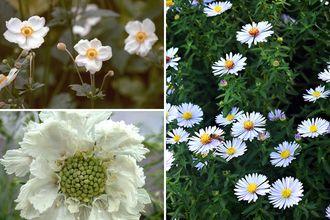 Borderplan Greet - Vaste planten borderpakket - Laatbloeiende tuinplanten - Wit - najaarsbloeiers borderpakket