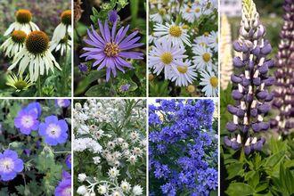 Borderplan Harry - Borderpakket Engelse tuin - Cottage border - Vaste planten - Paars & wit - vanaf 1 m2