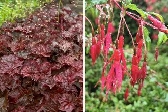 Borderplan Luna - Vaste planten borderpakket - Laatbloeiende tuinplanten - Rood - najaarsbloeiers borderpakket