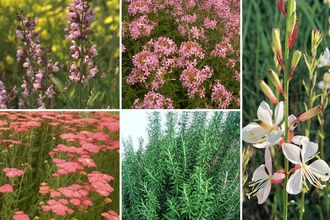 Borderplan Silvio - Mediterrane tuinplanten borderpakket - Roze & wit - Zon