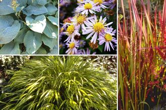 Borderplan Daniël - Borderpakket Japanse tuinplanten - Siergras & vaste planten - vanaf 3m2 - Oosterse tuin