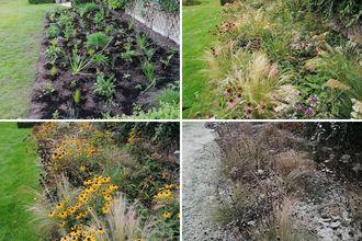 Borderplan Dries - Compleet prairietuin borderpakket vanaf 5 m2 - Siergras en vaste planten - Paars, wit & geel - Halfschaduw & Zon
