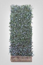 Hedera scherm (L) - 200h x 120b - Trellis + Hedera klimop haag (kant en klaar)