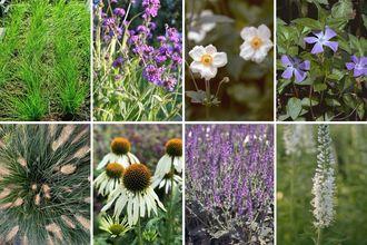 Borderplan Henk jan - Compleet borderpakket vanaf 1 m2 - Siergras en vaste planten - Paars & Wit - Zon