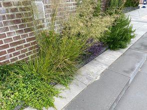 Borderplan Nienke - Borderpakket smalle border - Vlinders en bijen - Groenblijvende tuinplanten