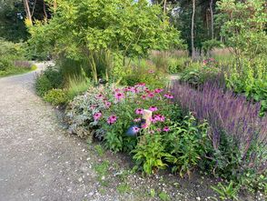 Borderplan Mara - Vaste planten borderpakket - Complete tuin - Onderhoudsvriendelijk - Prairietuin - Prairieborder - Halfschaduw & Zon