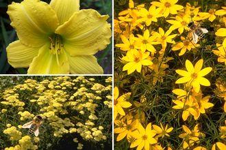 Borderplan Roos - Vaste planten borderpakket - Bijen - Bijvriendelijke tuinplanten - Geel - Zon & halfschaduw