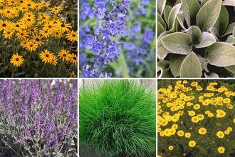 Borderplan Merel - Vaste planten borderpakket - Geel & Paars - Droge grond - Zon