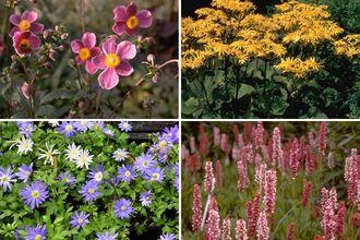 Borderplan Josefien - Vaste planten borderpakket - Kleurrijk - Halfschaduw