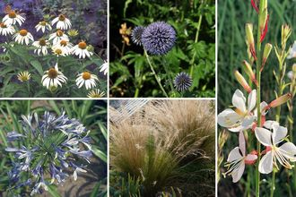 Borderplan Veerle - Vaste planten borderpakket - Blauw & Wit - Droge grond - Zon