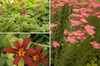Borderplan Noa - Vaste planten borderpakket - Rood - Zon