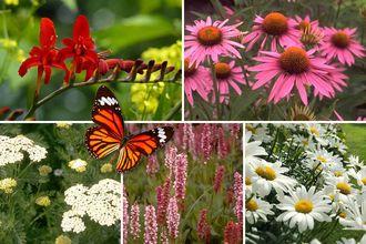 Borderplan Eline - Vaste planten borderpakket - Vlindertuin - Rood & Wit - Zon