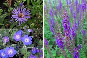 https://cdn.zilvercms.nl/http://yarinde.zilvercdn.nl/Borderplan Michel - Laatbloeiende vaste planten - Paars - najaar