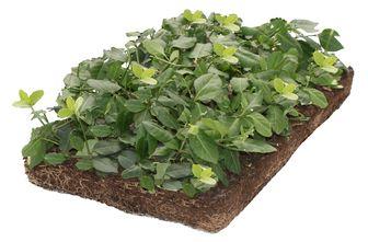 https://cdn.zilvercms.nl/http://yarinde.zilvercdn.nl/kant en klare tuinplantenmatten bodembedekkende plantenmatten