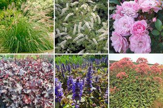 https://cdn.zilvercms.nl/http://yarinde.zilvercdn.nl/Zinzi - Borderpakket voor een vochtige tuin