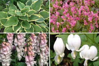 https://cdn.zilvercms.nl/http://yarinde.zilvercdn.nl/borderpakket schaduw wit roze vaste planten tuinplanten pakket