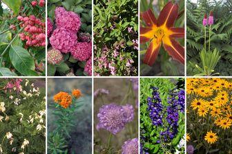 https://cdn.zilvercms.nl/http://yarinde.zilvercdn.nl/kant en klare tuin - pakket met alle planten