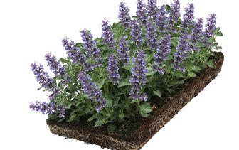 Kant en klare plantenmatten - bodembedekkers