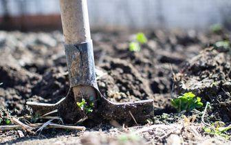 Planten per grondsoort