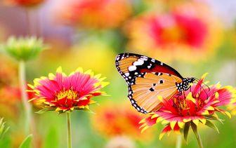 Vlinder lokkers (vlindertuin)