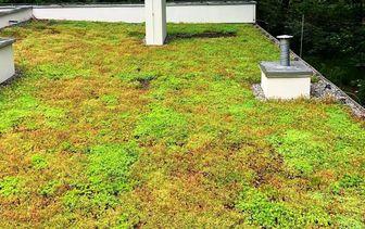 Groen dak Sedum