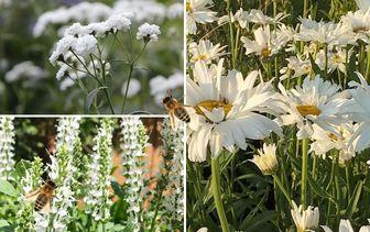 Borderpakketten - Bijen en insecten