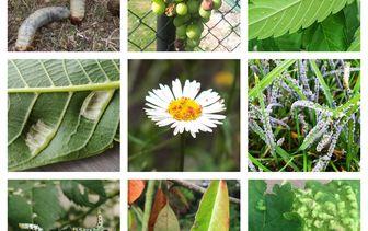 Plantenziekten en -plagen