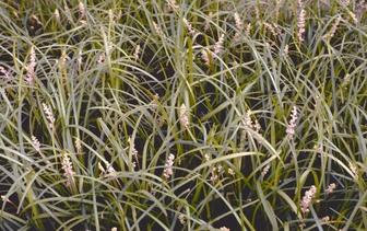 Planten voor winderige standplaats