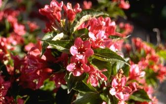 Planten voor halfschaduw