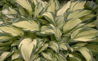 Bijzondere kleuren tuinplanten