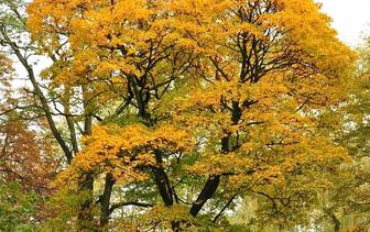 Bomen op soort