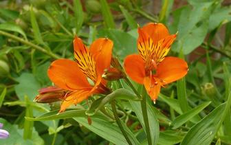 Onderhoudsarme tuinplanten voor in potten & bakken