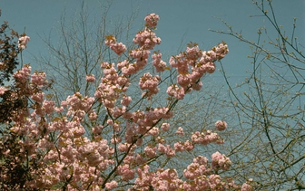 Solitaire bomen