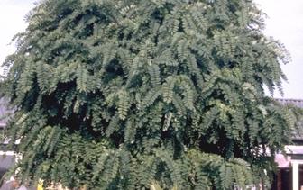 Alle Bomen