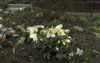 Januari bloeiers
