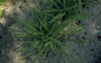 Planten voor schaduw