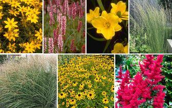 Borderpakketten met populaire tuinplanten
