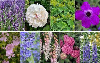 Borderpakketten - Engelse tuin - Cottage tuin