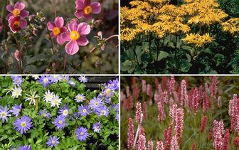 Borderpakketten - Vroegbloeiende tuinplanten - Voorjaar & vroege zomer